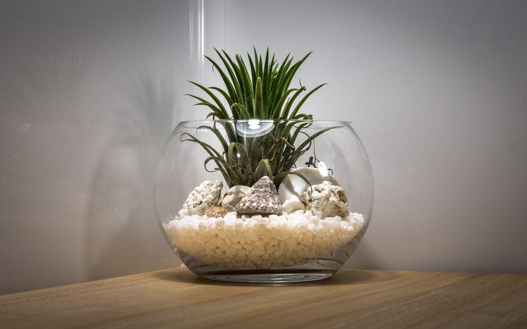 Fabriquez votre propre terrarium et économisez des centaines d'euros